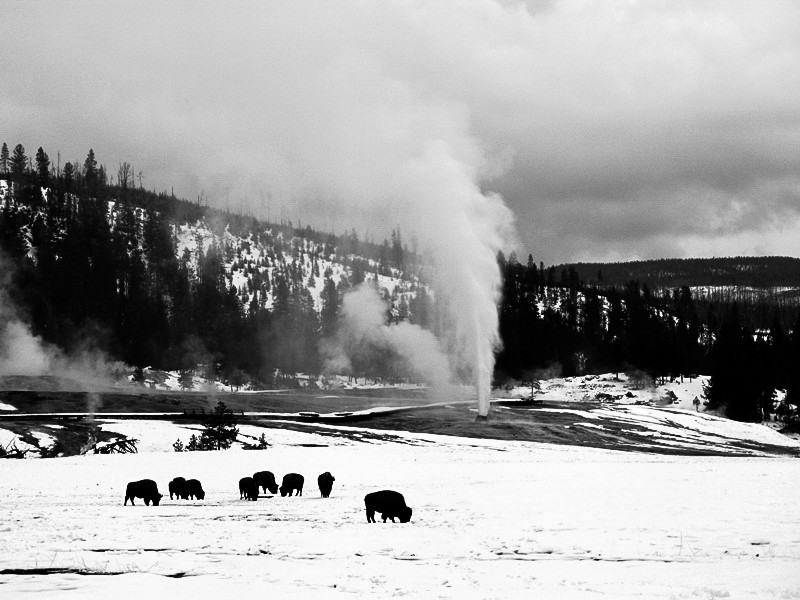 bison and bee hive 3.jpg