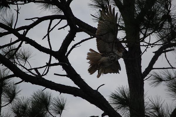 Journal Site 145: St. Joe's Peninsula State Park, Cape San Blas, FL - Dec 16, 2009
