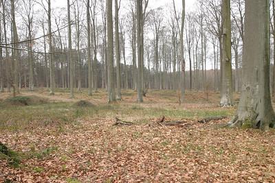 La forêt à la fin de l'hiver