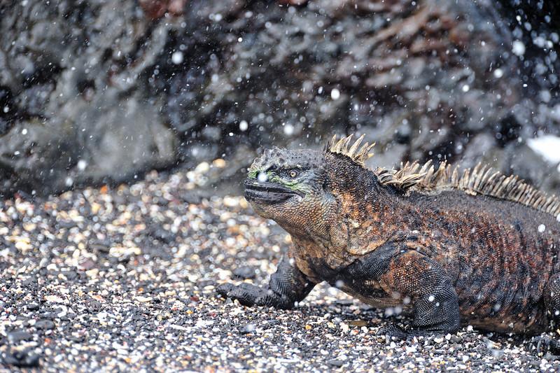 Galapagos Jul 2008 036.JPG