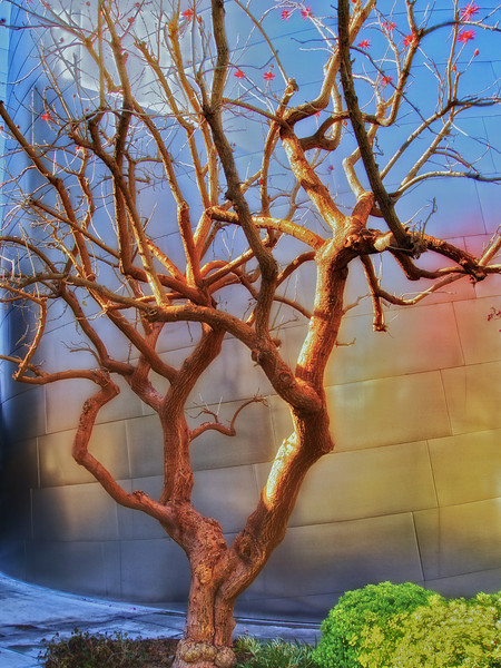 Walt Disney Concert Hall Tree