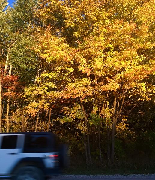 Saginaw-Grand-Rapids fall color 2016