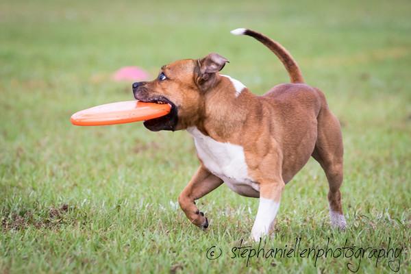 _MG_2241Up_dog_International_2016_StephaniellenPhotography.jpg