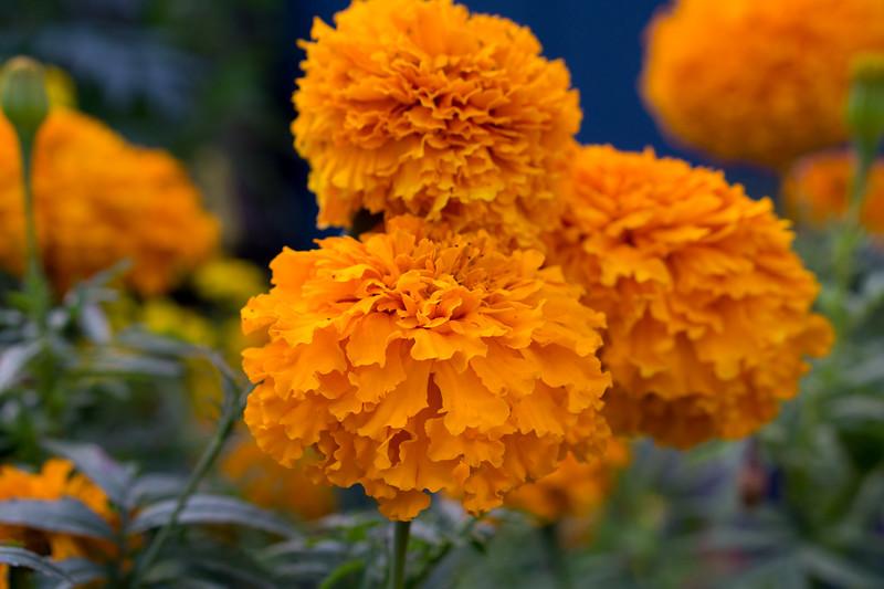 Flowerland-15.jpg