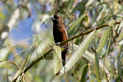 Birds Indonesia