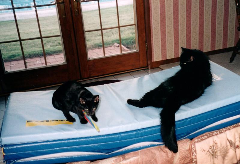 2000_April_Cats_0005_a.jpg
