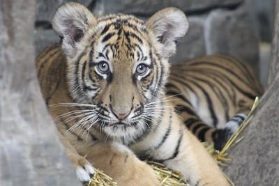 Cincinnati Zoo - 31 May '17