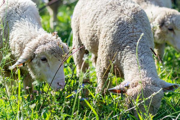 Slate Run Farm
