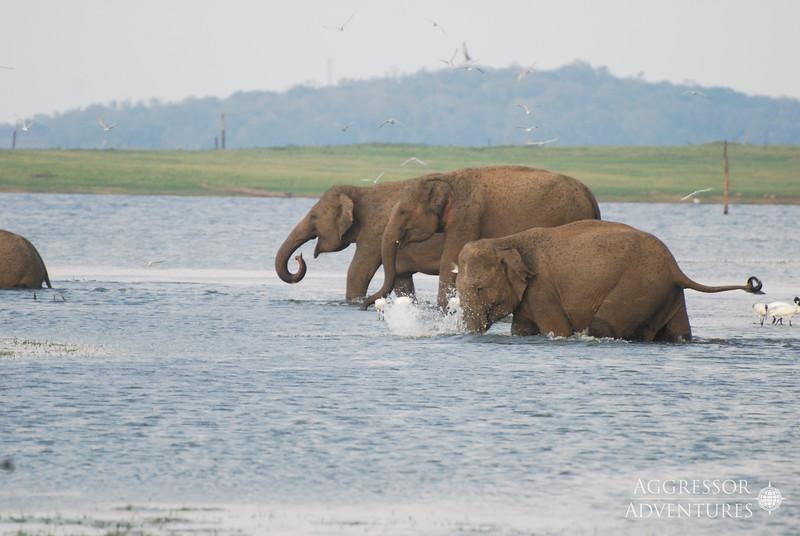 srilanka-animals-wm7.jpg