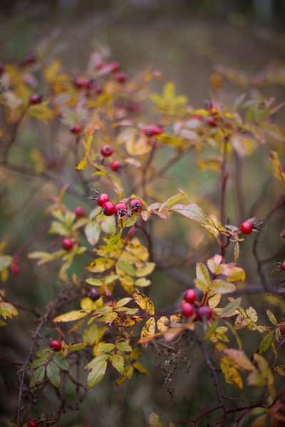 fall16winterriver-143-1.jpg