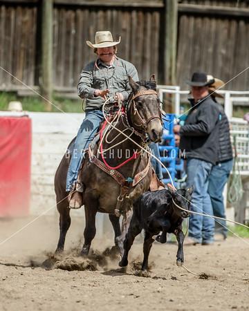 Broncs,Bulls,& Steers...  Falkland Spring HSR