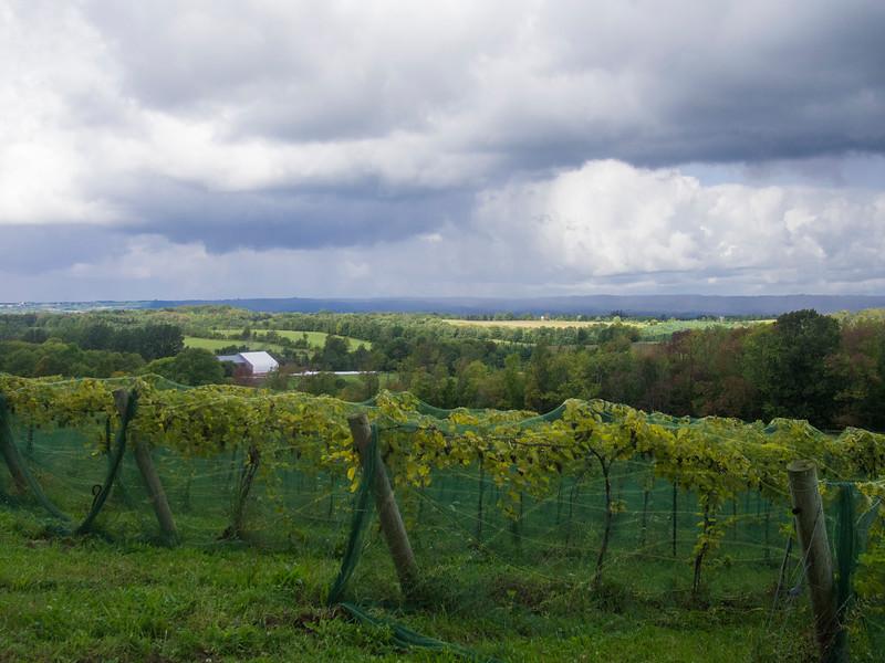 roost wine company horizontal.jpg