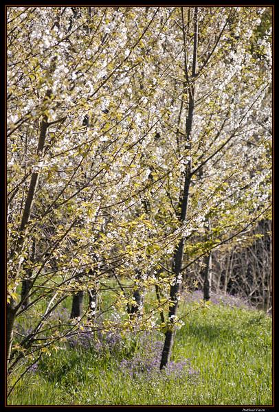 Vouga - 29-03-2008 - 5600.jpg