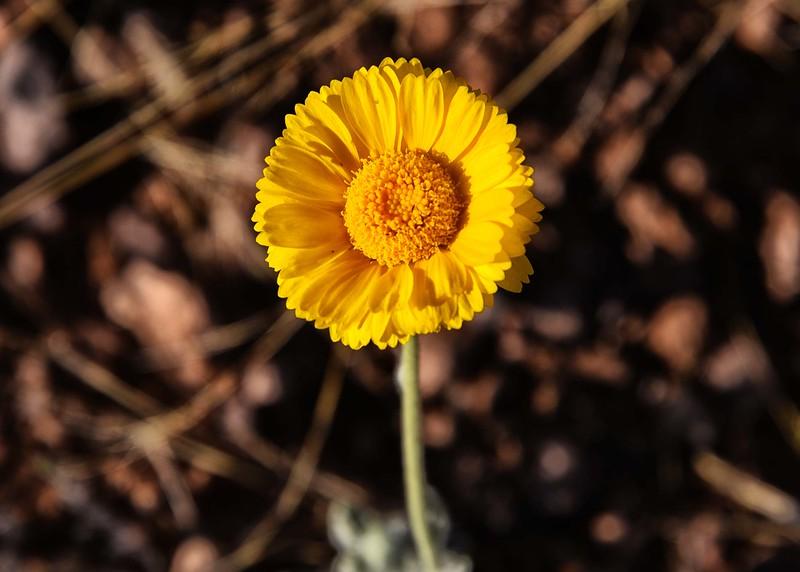 NEA_6796-7x5-Flower.jpg