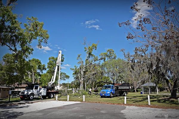Daily sightings...2021-03-10...Oldsmar ,FL Vets Memorial Park