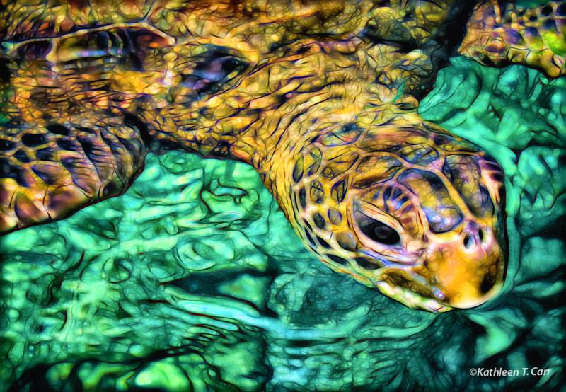 Turtle_1853adj2DEGlow.jpg