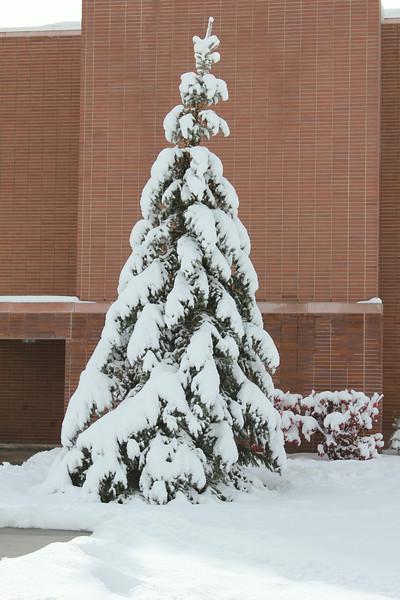 Snowy_Morning_11_10_2012_3323.JPG