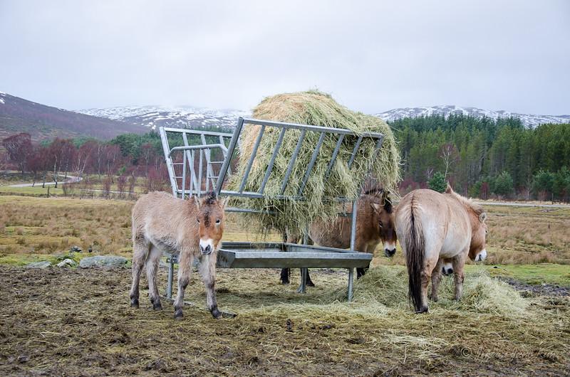 Scotland-Highland-8984.jpg