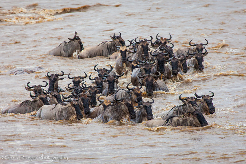 North_Serengeti-65.jpg