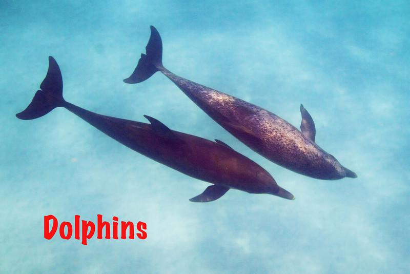 Dolphins 4.jpg