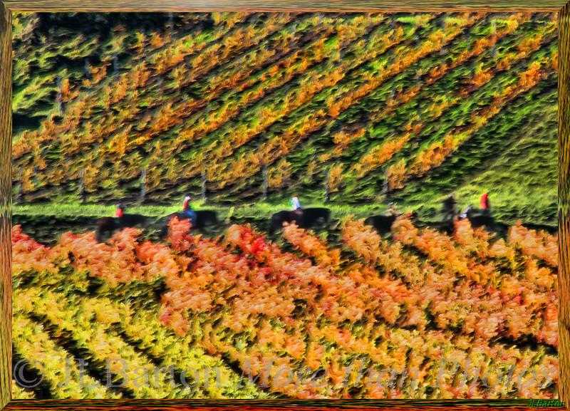 On horseback through the vineyards Autumn south of Vienna