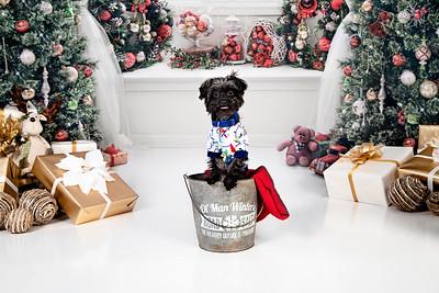 Bentley Christmas 2020