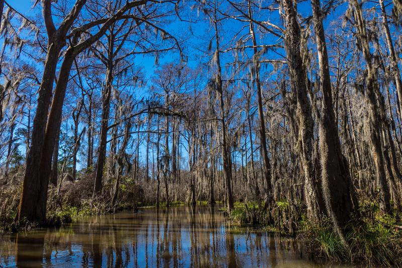 NOLA-swamp2016-043.jpg