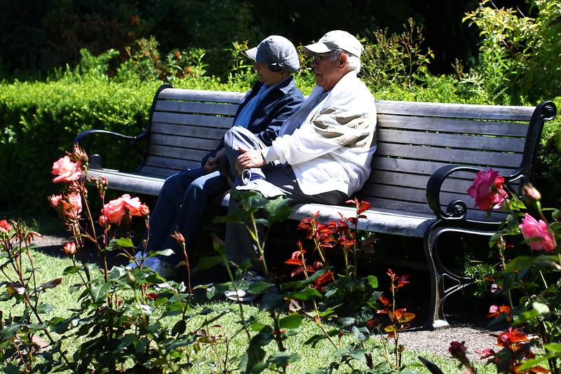 Portland International Rose Test Garden  2246.jpg
