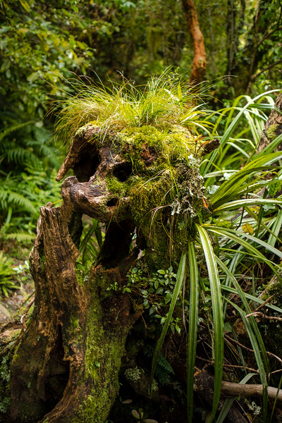 New Zealand_035.jpg
