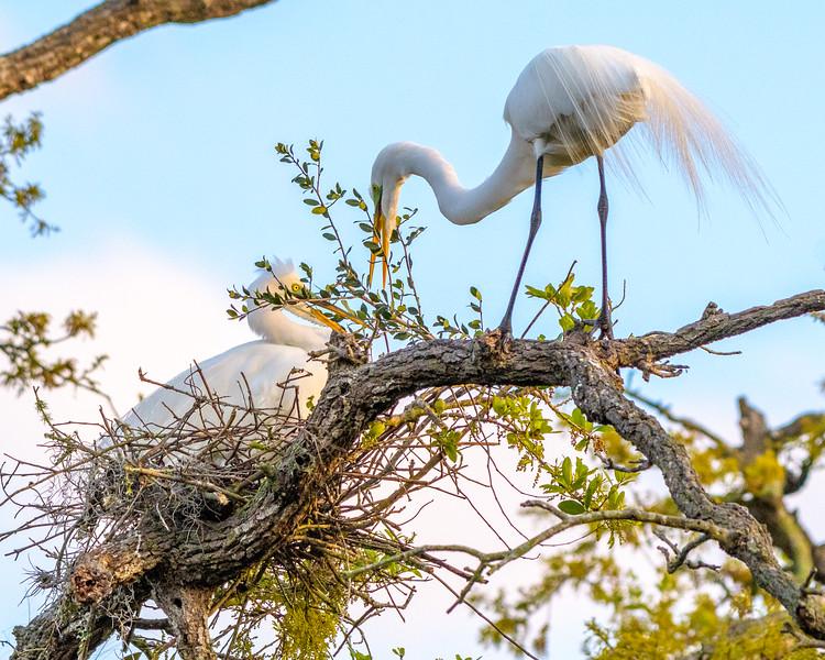 Great Egret - pretty big stick don't you think Honey?