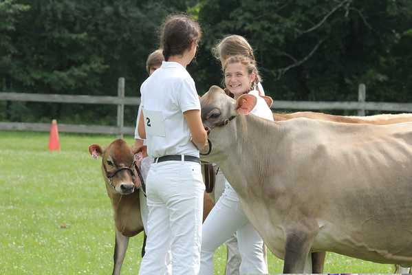 4-H Cattle Show