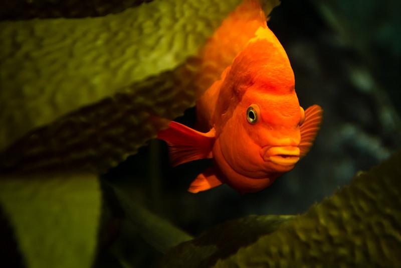 Aquarium 084.jpg