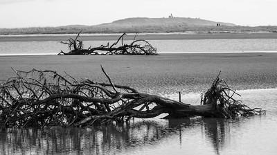 driftwood with Seguin Island Lighthouse, Popham Beach State Park, winter, Phippsburg Maine. Black and white image