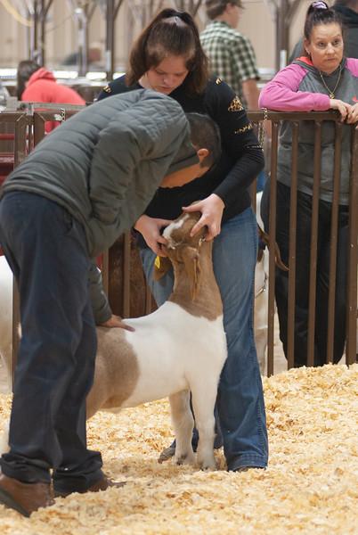 kay_county_showdown_goats_20191207-59.jpg