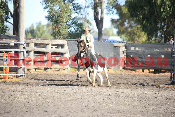 2014 03 22 ASH State Champs CampDraft 4yo and Maiden