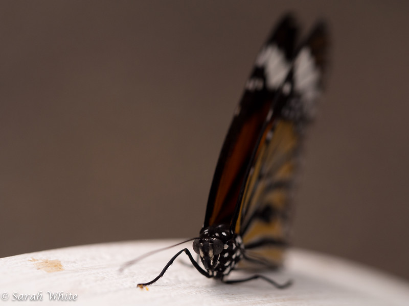 140503_ButterflyHouse_326.jpg