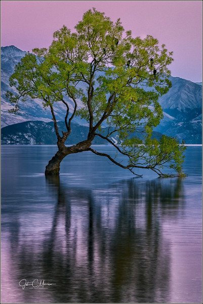 JM8_1869 Wanaka Tree cropped LPNLM WM.jpg