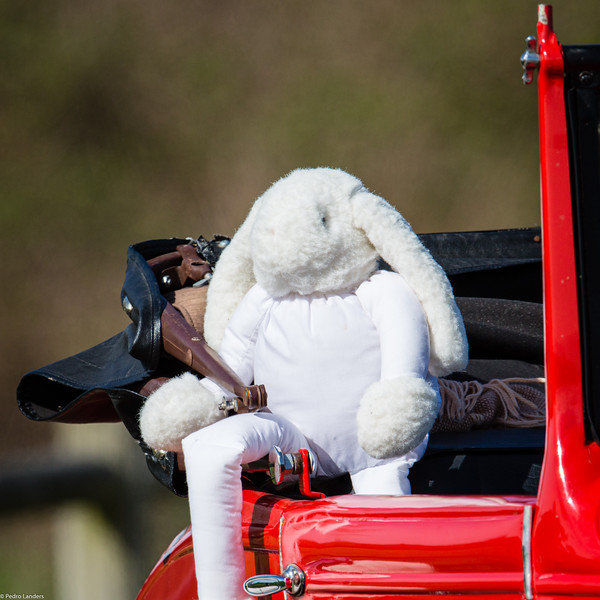 Easter Bunny Goes Posing for Photographs.jpg
