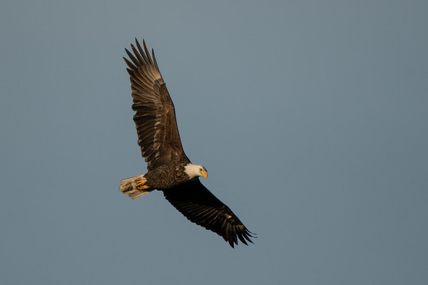 Photographing Eagles at Grand Lake & Ft Gibson~1-(29-30)-21