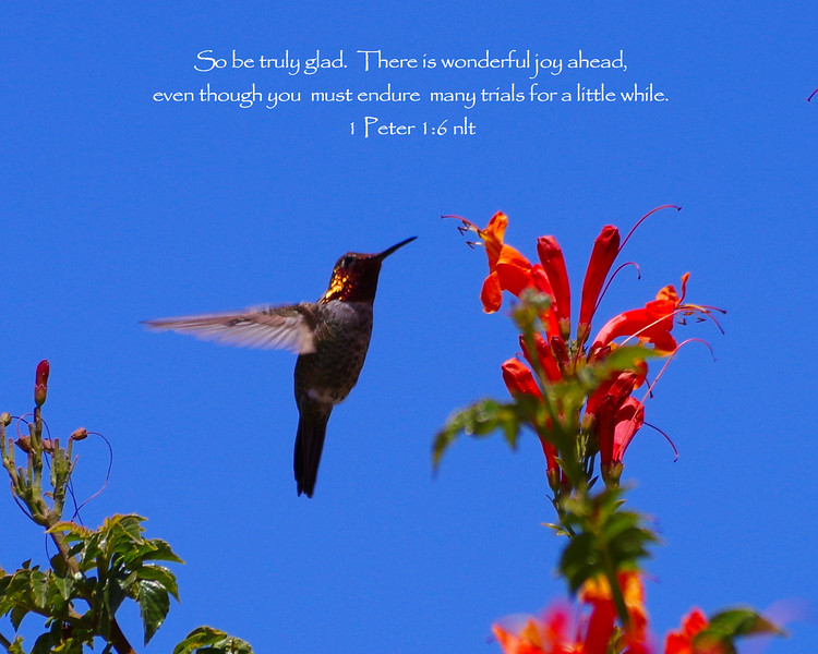 Joy Ahead