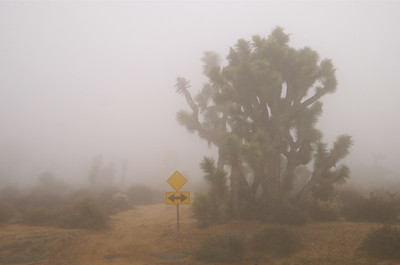 Fog in the Desert Jan. 5, 2016