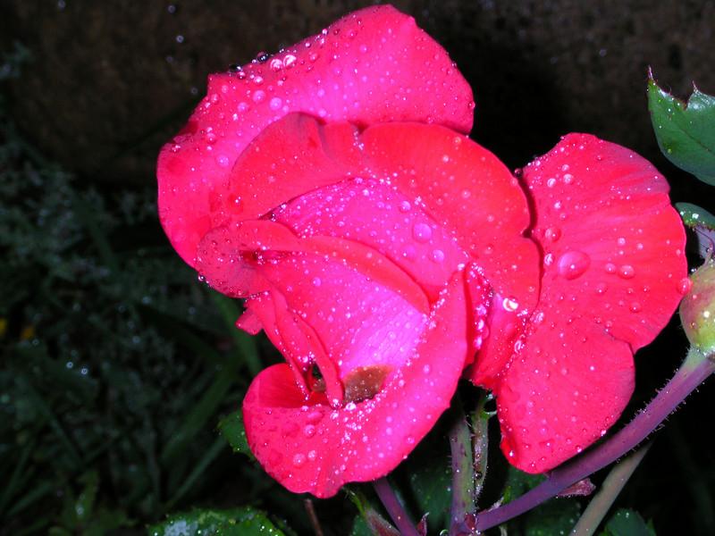 flowers64.JPG