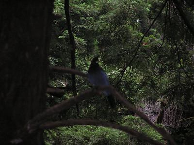 Butano Campout 2004