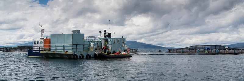 Salmon farms are a big industry