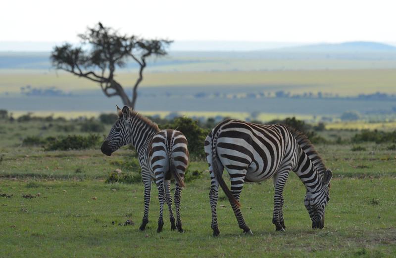 East Africa Safari 165.jpg