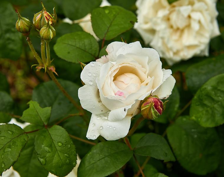 Flowers-5440.jpg