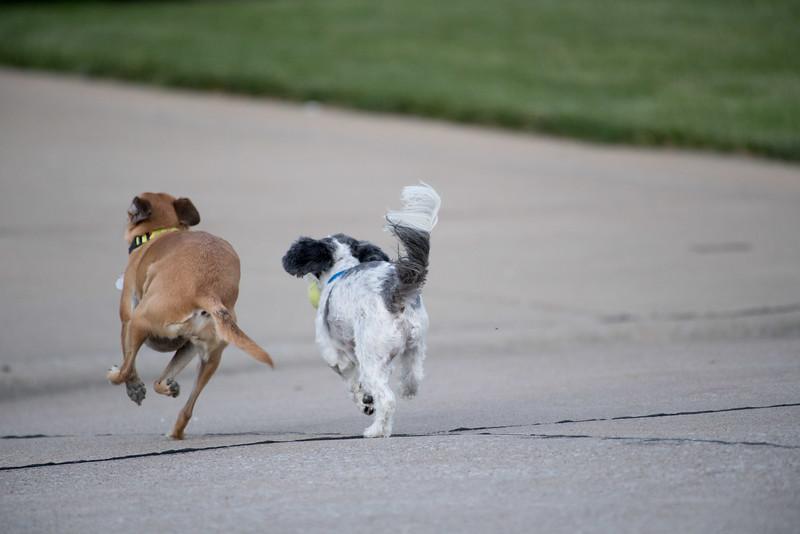 LuLu - Brady - Cooper Play Friends (26 of 109).jpg