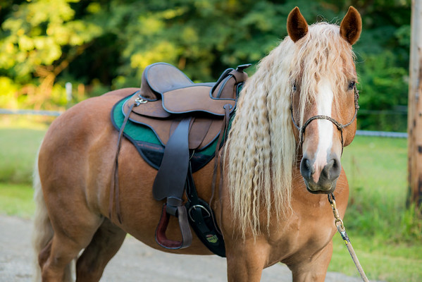 Black Forest Treeless Saddles 2019