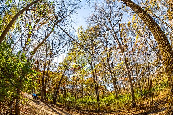 Missouri Woods