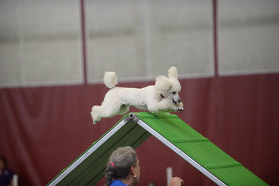 JAG AKC Agility Trial June 12-14